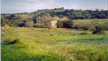 cregenzan-terreno-5.jpg